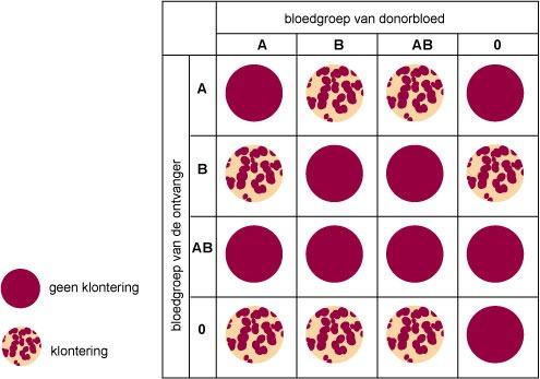 bloedgroep b positief zwanger